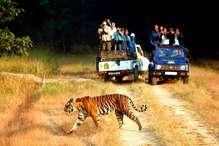 बाघों के बढ़ने से कॉर्बेट प्रबंधन को सता रही है एक चिंता