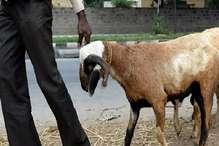 बकरी चुराते हुए चोर को ग्रामीणों ने पकड़ा, जमकर की धुनाई