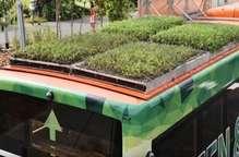 सिंगापुर में बसों की छत पर उगाए जा रहे हैं पौधे