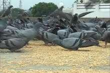 पंछियों से रिंकू का याराना, 10 साल से डाल रहे 60 किलो दाना