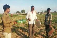 टिड्डियों को भगाने के लिए किसान अपना रहे देशी तरीका