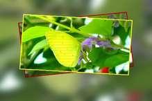 देखिए कॉर्बेट नेशनल पार्क में तितलियों की रंग-बिरंगी दुनिया