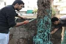 गुजरात में ऐसे किया जा रहा है बीमार पेड़ों का इलाज