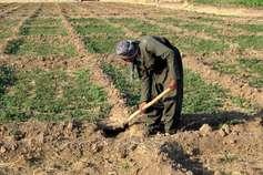 कवर्धा के किसानों को अबतक नहीं मिला फसल बीमा, सूखा राहत का पैसा, ये है वजह