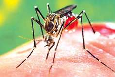 भिलाई में डेंगू: 21 दिन में 23 लोगों की मौत से सकते में शहर, प्रशासन लाचार
