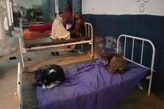 यहां मरीजों को मयस्सर नहीं बेड, कुत्ते यूं फरमा रहे आराम