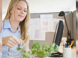 ऑफिस की खिड़की से नहीं दिखता गार्डन तो डेस्क पर रखें ये पौधे