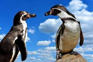 पेंगुइन मम्मी भी अपने बच्चे को वैसे ही डांटती है जैसे आपकी मम्मी आपको
