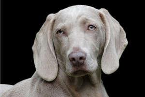 कुत्ते का बना था राशन कार्ड, हर महीने मिलता था 5 किलो अनाज!
