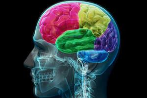 जब भूख लगती है तो दिमाग में क्या-क्या होता है?