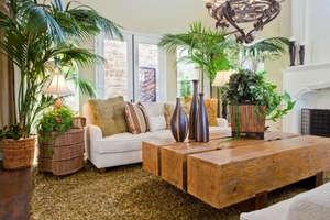 VASTU: हर घर में लगे होने चाहिए ये 5 पौधे, आती है सकारात्मक ऊर्जा और खुशहाली!