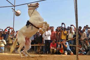 पुष्कर मेला 2018: वह पशु मेला जिसके दीवाने दुनिया भर से आते हैं, देखे तस्वीरें