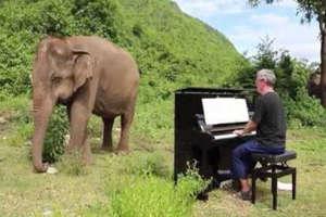 यहां इंसान नहीं हाथियों को खुश करने के लिए बजाया जाता है पियानो