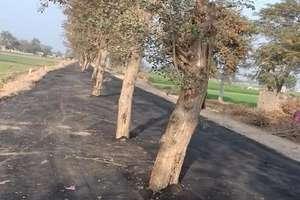 PHOTOS: PWD विभाग की कारगुजारी, बिना पेड़ हटाए बना दी सड़क