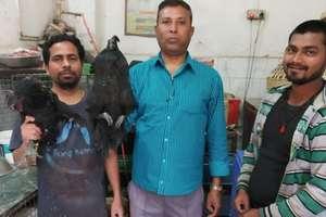 PHOTOS: चिकन खाने वालों के लिए खुशखबरी, गोरखपुर पहुंचा मशहूर 'कड़कनाथ'
