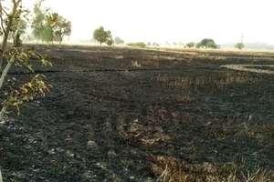 फतेहाबाद: बिजली की तार से निकली चिंगारी ने जलाई किसानों की फसल