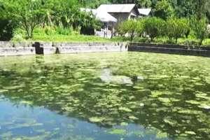 रियासत कालीन तालाब बदहाली का शिकार
