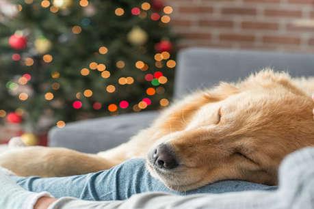 मालिक के लिए फरिश्ता बनकर आया कुत्ता, इस तरकीब से भीषण ठंड में बचाई जान