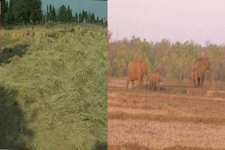 सूरजपुर में हाथियों का आतंक, कोरंधा गांव में सो रहे किसान पर किया हमला