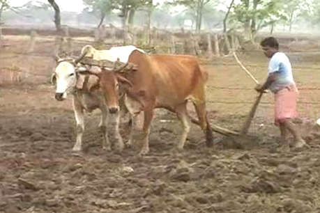 बिहार का किसान है सबसे गरीब... जानिए कितनी है अन्नदाता की आय