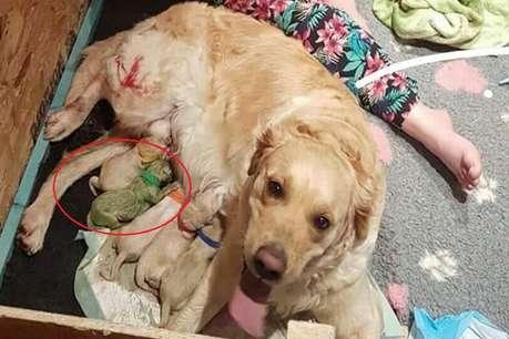 कुतिया ने दिया हरे पिल्ले को जन्म, मालकिन भी देखकर रह गई हैरान