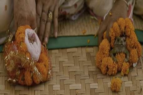 OMG! मेढक-मेढकी की शादी