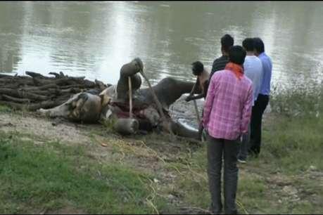 डैम में फंसकर हाथी के शावक की मौत