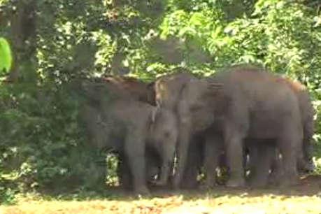 हाथियों का आतंकः सूंड से उठाकर जमीन पर पटका, मौके पर मौत
