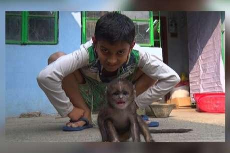 सबका दुलारा है बंदर का ये बच्चा, आंखें नम कर देगी इसकी कहानी