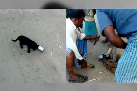 VIRAL VIDEO: दही के चक्कर में सिर में फंसा लिया लोटा, गांववालों ने ऐसे निकाला बाहर