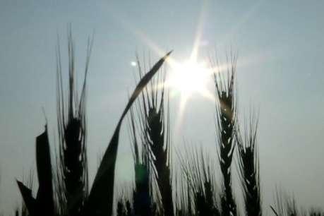 किसानों पर कुदरत की मार, अब तापमान ने बढ़ाई चिंता !