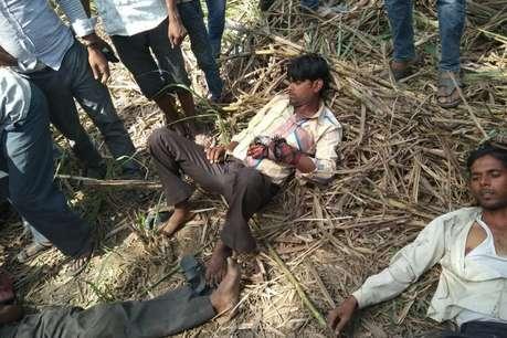 पीलीभीत: गन्ने के खेत में तीन मजदूर टाइगर के हमले में बुरी तरह घायल