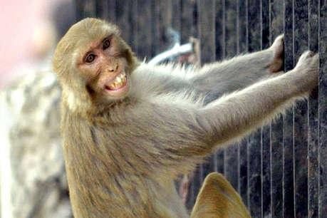 इस जोड़े ने एक बंदर को बनाया अपना बेटा, नाम कर दी सारी संपत्ति
