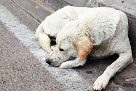 आगरा में सोते हुए कुत्ते के ऊपर ही बनवा दी सड़क, मामला दर्ज
