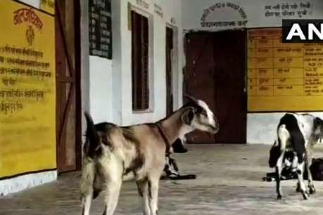 बस्ती: कब्रिस्तान में प्राइमरी स्कूल, बच्चों की जगह सिर्फ नजर आते हैं जानवर