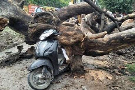 DRM ऑफिस के बाहर गिरा पेड़, स्कूटी सवार महिला की दबकर मौत