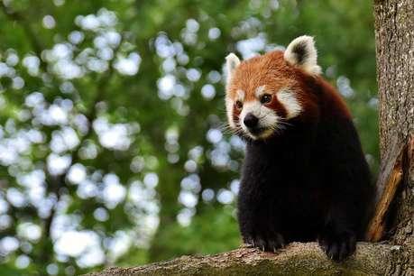 जानवरों के क्यूट वीडियो देखते हैं...तो सच जान लीजिए