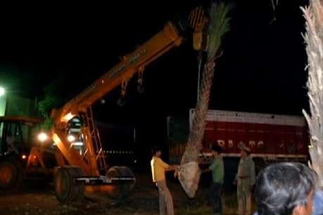 एक बार प्रयोग असफल होने के बावजूद लगाए जा रहे 12 से 14 फुट के पेड़