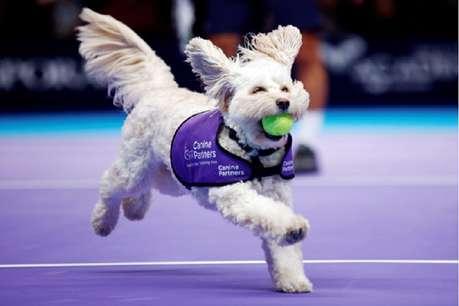 टेनिस में अब स्कूली बच्चे नहीं बल्कि कुत्ते लाएंगे कोर्ट से बाहर गई बॉल, देखिए Video