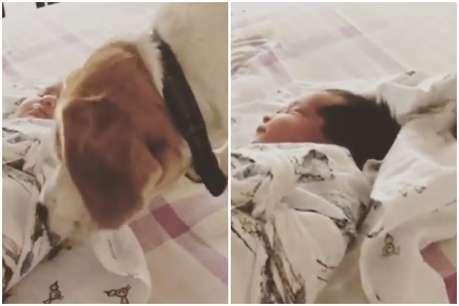 रोहित शर्मा की बेटी को लगी ठंड तो कुत्ते ओढ़ाई चादर, वायरल हुआ VIDEO