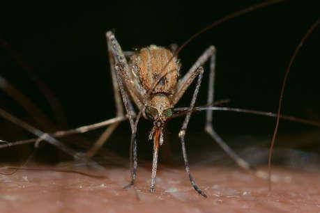World Maleria Day:इन आसान उपायों को अपनाकर मच्छरों को पनपने से रोकें!