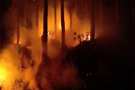 आग बुझाने में वन विभाग फिसड्डी, महीने भर में खाक हुई लाखों की वन संपदा
