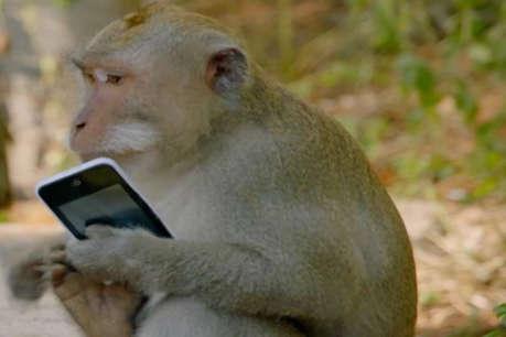 संभल: योग कार्यक्रम के दौरान तीरंदाज का मोबाइल ले उड़ा बंदर