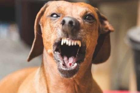 कुत्तों से परेशान बुजुर्ग ने CM भूपेश बघेल को किया कॉल, फिर कुत्ता पकड़ने खुद निकले साहब