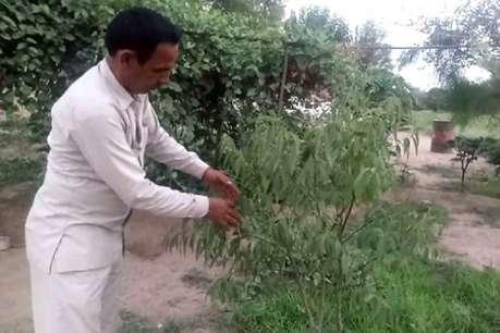 रेतीले इलाके में सेब उगाकर हरियाणा के इस किसान ने असंभव को किया संभव