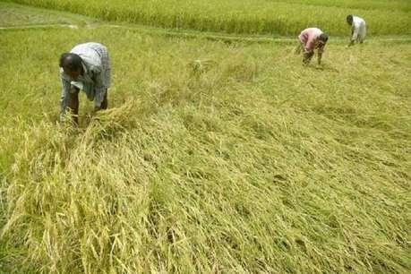 किसानों को 8 हजार रुपये सालाना मिले आर्थिक मदद- रिपोर्ट