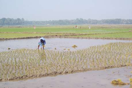 हरियाणा में तेजी से गिरता जा रहा भूजल स्तर, धान की खेती मुख्य वजह