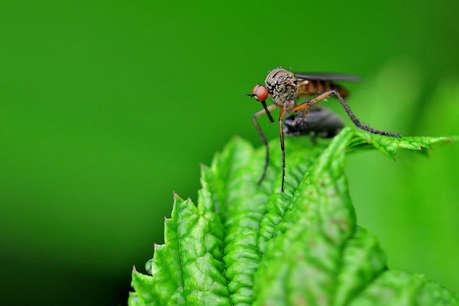 मच्छरों से करें बचाव, घर में बेहद कम खर्च में बनाएं Mosquito स्प्रे