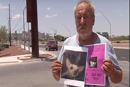गायब हुआ पालतू कुत्ता, शख्स बोला- खोजने वाले को दूंगा फ्लैट, जमीन और वर्कशॉप