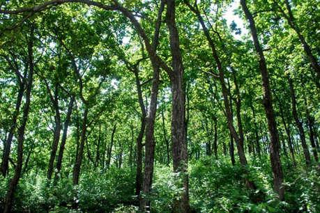 हजारीबाग में फर्जी दस्तावेज के आधार पर बेच दी 500 एकड़ वनभूमि